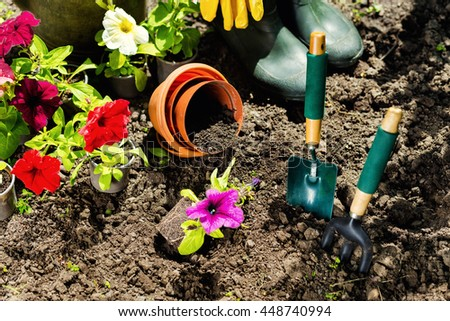 Gardening tools and flowers in the garden. Watering can, rubber boots,  flowers, vases,  garden tools, rubber gloves. Gardening composition. Garden, green bushes, yield ground. Working in the garden.  - stock photo