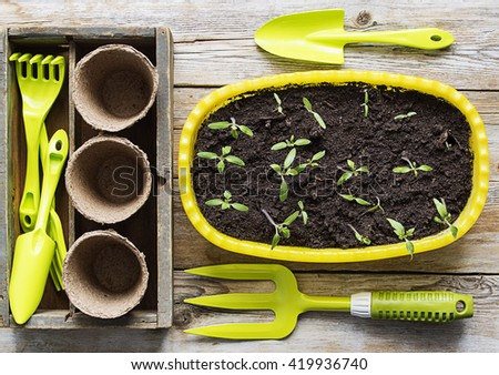 gardening tools and seedling in soil surface on a wood background