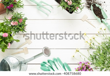 Gardening tools, flowers in pots and watering can on white wooden table. Spring in the garden concept background with free text space (top view, flat lay). - stock photo