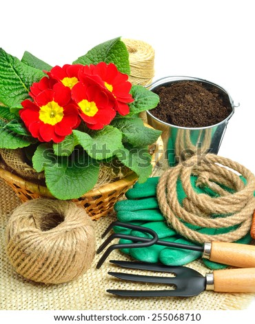Gardening tools, primulas with rake, shovel, watering can, thread isolated on white - stock photo
