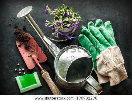 Gardening tools: watering can, flowers, gloves, spade, soil and seeds on black chalkboard background. Spring in the garden concept. - stock photo