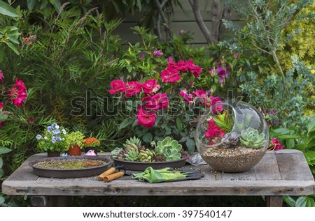 Gardening tools, watering can, seeds, plants and soil on vintage table in garden