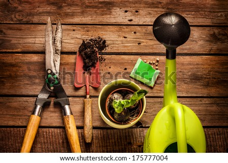 Gardening tools, watering can, seeds, plants and soil on vintage wooden table. Spring in the garden concept. - stock photo