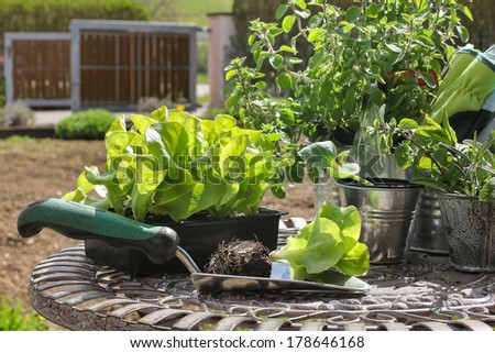 Gardening tools with seedlings - stock photo