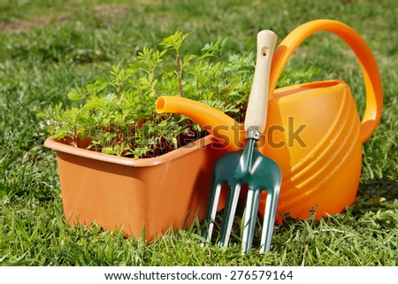Gardening tools with watering can and a box of seedling in the garden