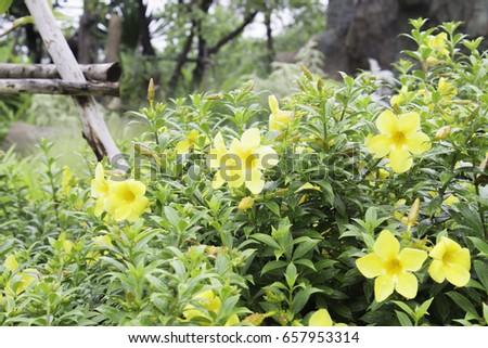 Outdoor Pathways gardening beautiful flowers outdoor pathways stock photo 657953818