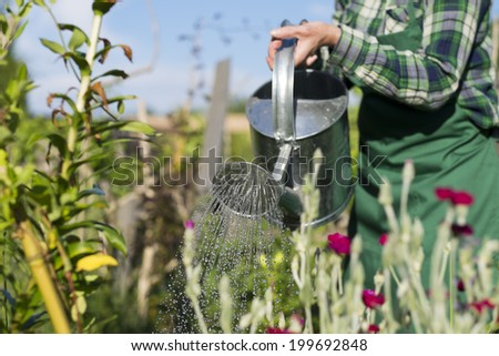Gardening woman watering the flowers in garden - stock photo