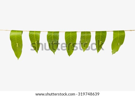 Garland Of Mango Leaves Toran It Is Auspicious In Hindu Religion And Used As