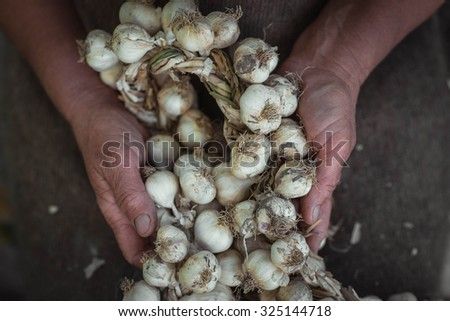 garlic braided in a pigtail holding in their hands - stock photo