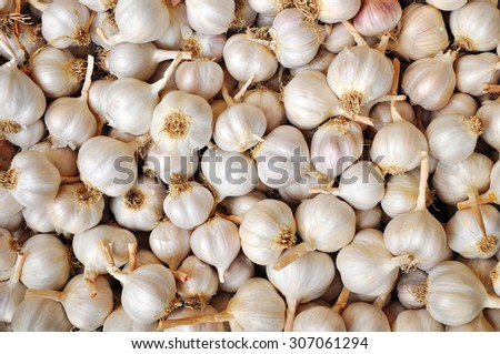 Garlic bulbs, spicy vegetables - stock photo