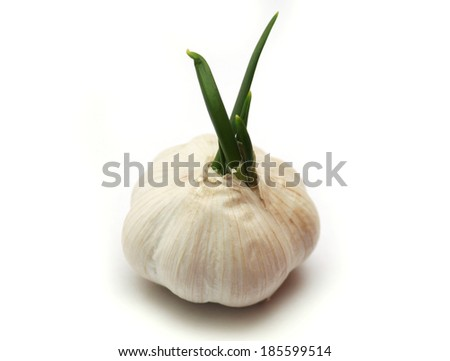 Garlic isolated on white background with green sprout - stock photo
