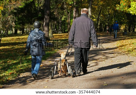 Gatchina, Russia - October 3, 2015: The dog owners walk their disabled in the Gatchina park. - stock photo