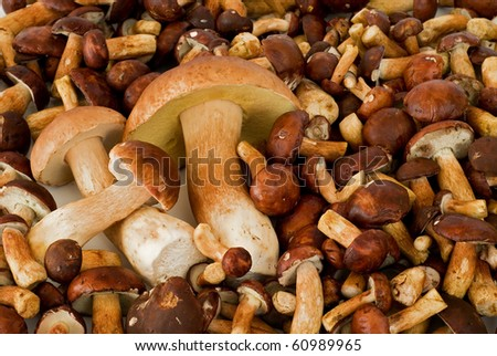 gathered mushrooms boleti and bay boletes - stock photo