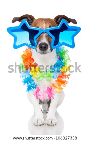 gay dog with glasses