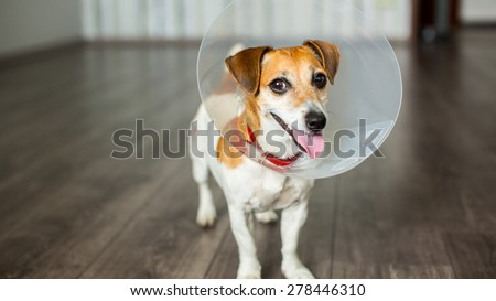 Gay nice friendly dog with vet Elizabethan collar is smiling - stock photo
