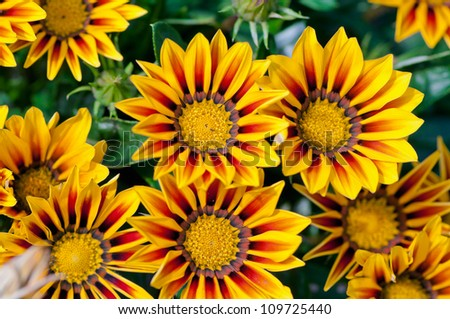 South African Flowers Stock Photos, Images, & Pictures ...