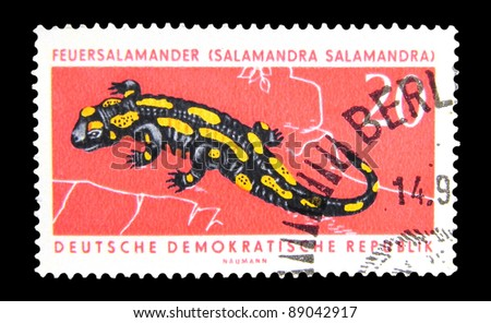 "GDR - CIRCA 1962: A Stamp printed in GDR (East Germany) shows the image of a Fire Salamander with the inscription ""Salamandra salamandra"" from the series ""Protected animals"", circa 1962"