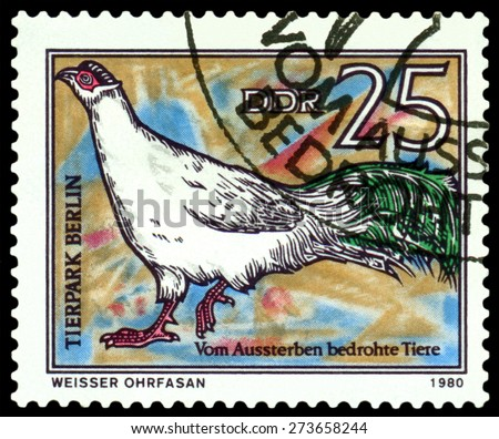 GDR - CIRCA 1980: A stamp printed in  GDR,  shows  bird  White-eared pheasant, series  Zoo, Berlin, circa 1980 - stock photo