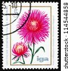 GDR - CIRCA 1975: a stamp printed in GDR shows China Aster, Callistephus Chinensis, Flower, circa 1975 - stock photo