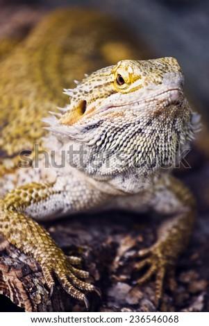 Gecko close up - stock photo