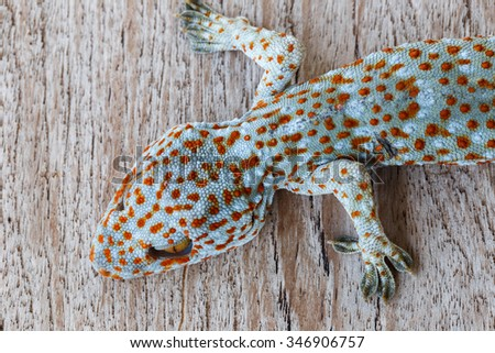 gecko on wood