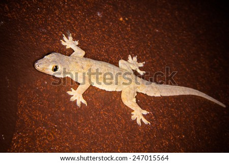 gecko portrait close up macro - stock photo
