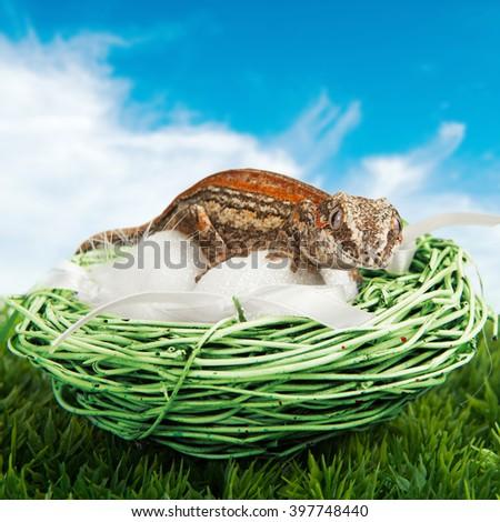 Gecko sitting on some fake eggs - stock photo