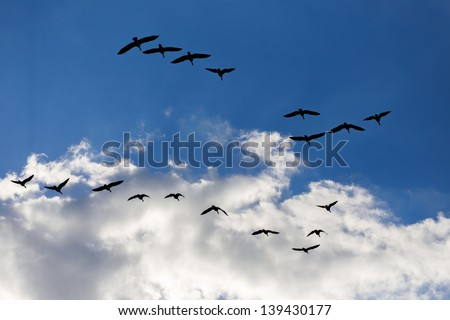 Geese flying in formation against the evening sky.