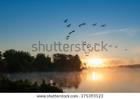 Geese taking off of lake