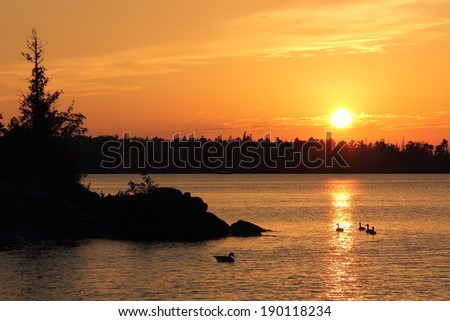 Geese Watching Sunset - sunset over water in the north woods. - stock photo
