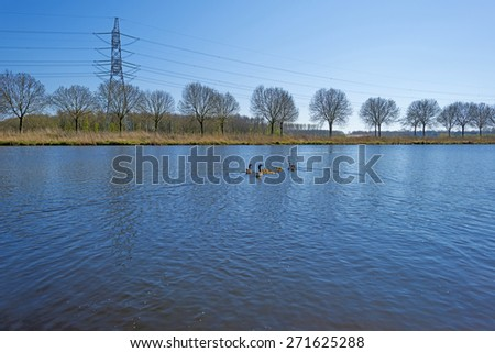 Geese with goslings in spring swimming in a canal  - stock photo
