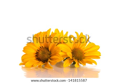 geliopsis beautiful yellow flowers isolated on white background
