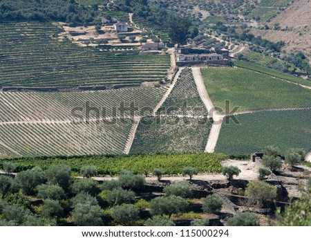 General view of the world famous vineyards of Porto wine.Abandoned farm houses as result of mechanization of modern agriculture.(Square frame) - stock photo