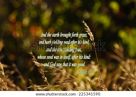 """Genesis 1:12 """"And the earth brought forth grass, and herb yielding seed after his kind, and the tree yielding fruit, whose seed was in itself, after his kind: and God saw that it was good."""" KJV Bible - stock photo"""