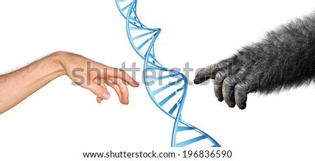 Genetic common ancestry concept for evolution of primates - stock photo