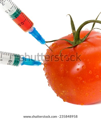 Genetic modification concept with tomato receiving an injection  - stock photo
