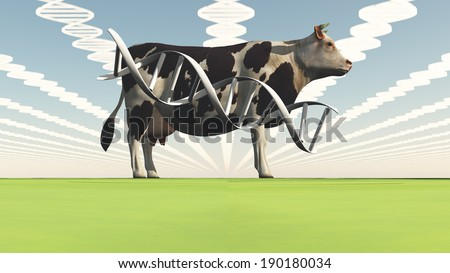 Genetically modified cow - stock photo