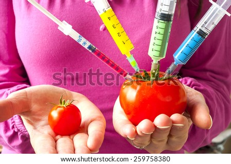 Genetically modified organism - ripe tomato with syringes in the hands of women - stock photo