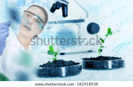Genetically modified plant tested in ecology laboratory. - stock photo