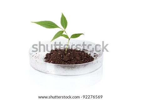 Genetically modified plant tested in petri dish - stock photo