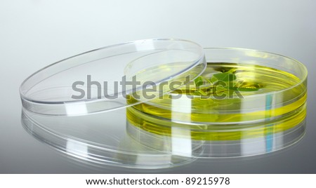 Genetically modified plant tested in petri dish gray background - stock photo
