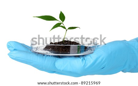 Genetically modified plant tested in petri dish in hand isolated on white - stock photo