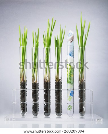 Genetically modified plants inside of test tubes - stock photo