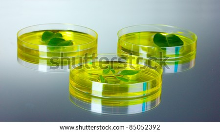 Genetically modified plants tested in petri dishes gray background - stock photo