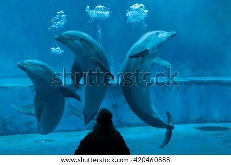 GENOA, ITALY - MARCH 22, 2016: Animal trainer performs with common bottlenose dolphins (Tursiops truncatus) in the Genoa Aquarium in Genoa, Liguria, Italy.  - stock photo