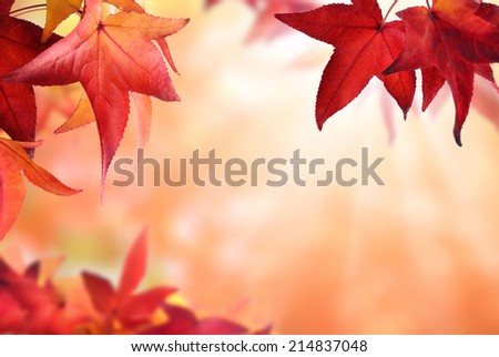 Gentle autumn bokeh background bordered by red maple leaves, with light rays and shallow focus - stock photo