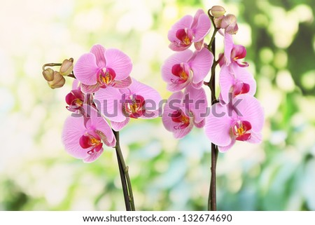 Gentle beautiful orchid on natural background