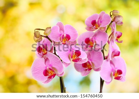 Gentle beautiful orchid on natural background - stock photo