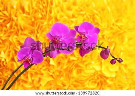 Gentle beautiful orchid on yellow background - stock photo
