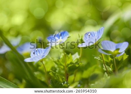 Gentle blue wild flowers on defocused background - fresh spring nature - stock photo